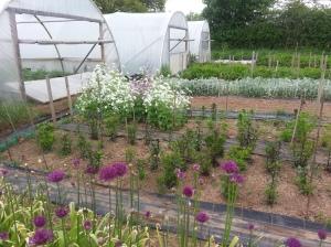 produce grown at Pencoed Growers